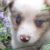 Profilbild von Willi Lennips